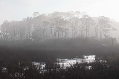 Fog on the Salt Marsh