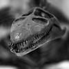 Nessie Smiles