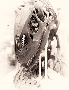 Allosaurus II
