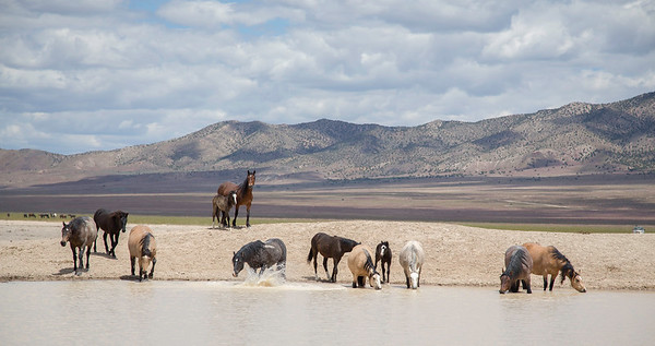 Utah's Great Desert Basin
