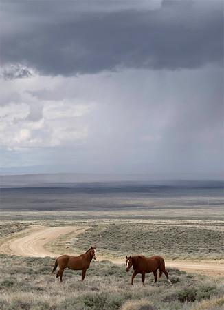 Pilot Butte Wild Mustangs | Wyoming