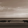Corolla Beach Wild Horses | North Carolina