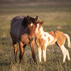 Onaqui Mustangs | Great Desert Basin | Utah