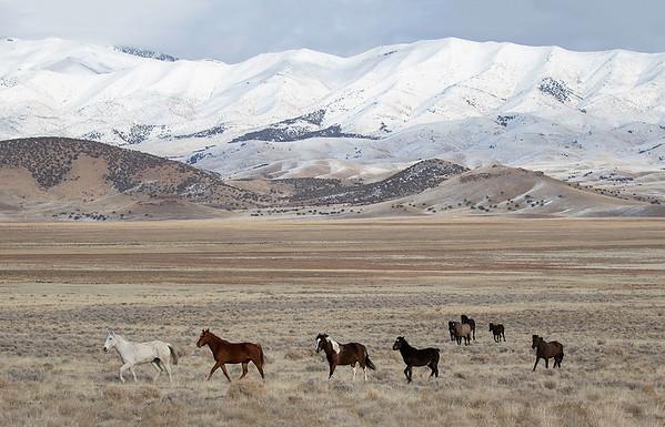 Onaqui Wild Mustangs | Utah