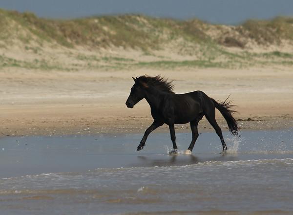Corolla  Beach | North Carolina