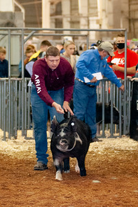 americanroyal2020_barrows012