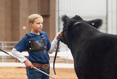 americanroyal2020_cattle_showmanship001