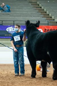 americanroyal2020_cattle_showmanship011