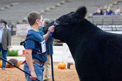 americanroyal2020_cattle_showmanship007