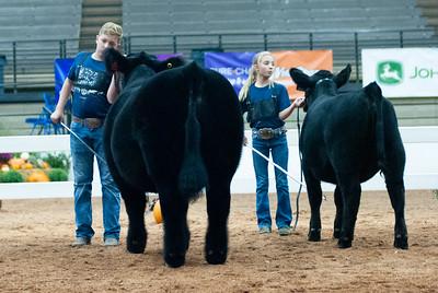 americanroyal2020_cattle_showmanship009