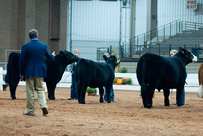 americanroyal2020_cattle_showmanship010