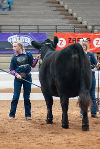 americanroyal2020_cattle_showmanship021