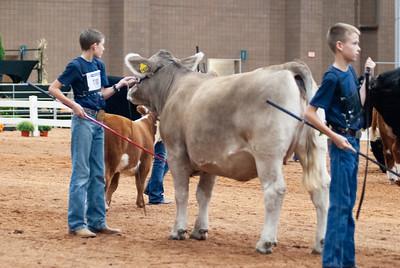americanroyal2020_cattle_showmanship005