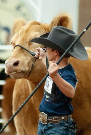 americanroyal2020_cattle_showmanship015
