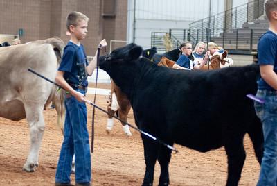 americanroyal2020_cattle_showmanship006