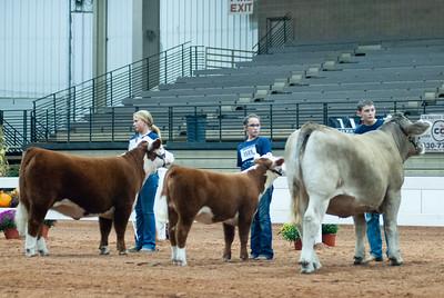 americanroyal2020_cattle_showmanship008