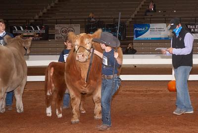 americanroyal2020_cattle_showmanship022