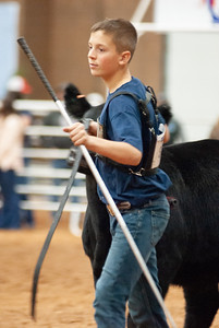americanroyal2020_cattle_showmanship013