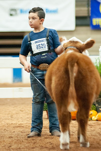 americanroyal2020_cattle_showmanship016
