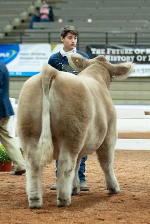 americanroyal2020_cattle_showmanship019