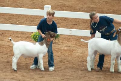americanroyal2020_goat_showmanship011