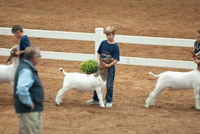americanroyal2020_goat_showmanship016