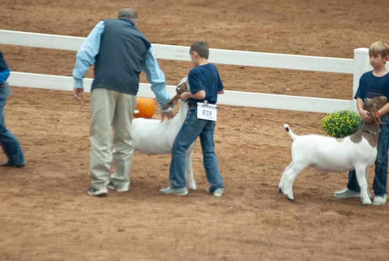 americanroyal2020_goat_showmanship014
