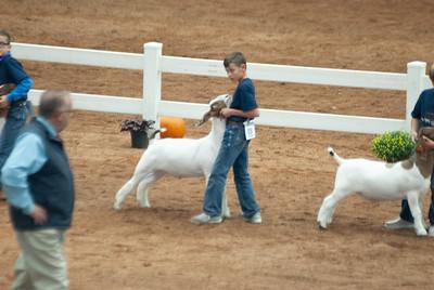 americanroyal2020_goat_showmanship015