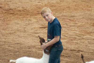 americanroyal2020_goat_showmanship018
