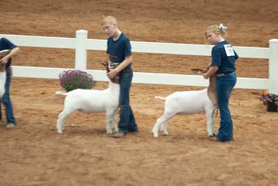 americanroyal2020_goat_showmanship007