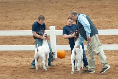 americanroyal2020_goat_showmanship020