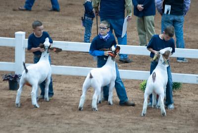 americanroyal2020_goat_showmanship003
