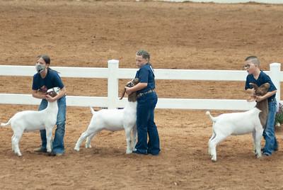 americanroyal2020_goat_showmanship021