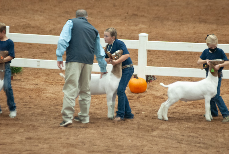 americanroyal2020_goat_showmanship012