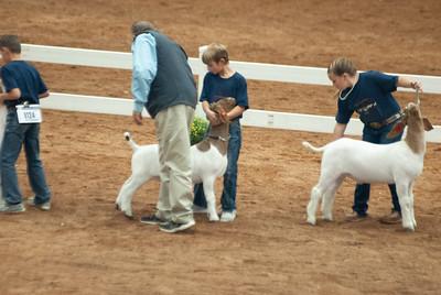 americanroyal2020_goat_showmanship013
