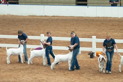 americanroyal2020_goat_showmanship022