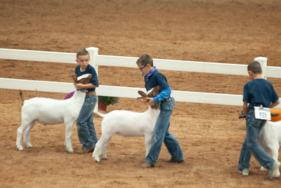 americanroyal2020_goat_showmanship010