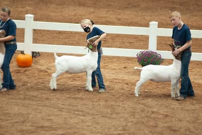 americanroyal2020_goat_showmanship008