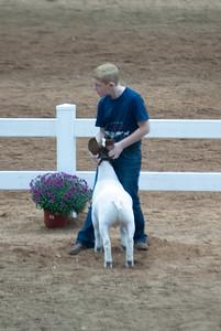 americanroyal2020_goat_showmanship004