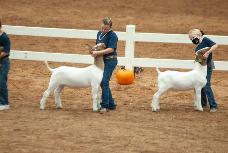 americanroyal2020_goat_showmanship009