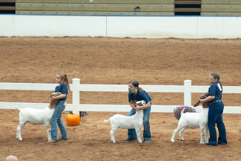 americanroyal2020_goat_showmanship023