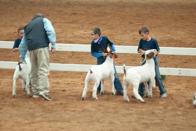 americanroyal2020_goat_showmanship005