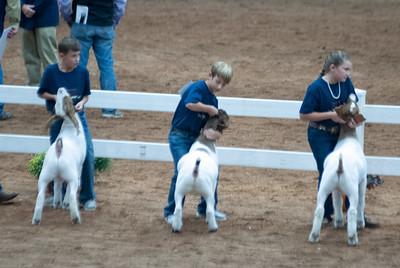 americanroyal2020_goat_showmanship002