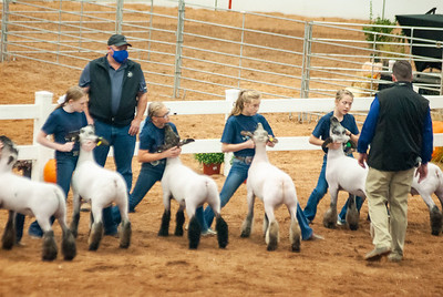 americanroyal2020_sheep_showmanship016