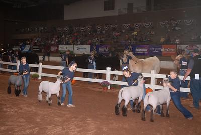 americanroyal2020_sheep_showmanship003