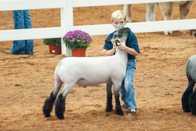 americanroyal2020_sheep_showmanship009