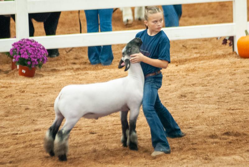 americanroyal2020_sheep_showmanship013