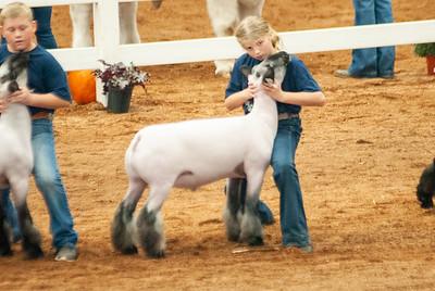 americanroyal2020_sheep_showmanship010