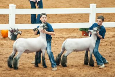 americanroyal2020_sheep_showmanship022