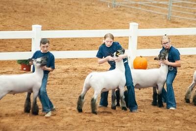 americanroyal2020_sheep_showmanship021
